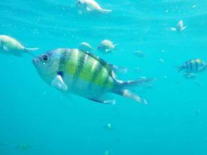wyspa koh Phi Phi don rybki