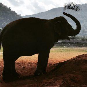 chiang mai sanktuarium sloni