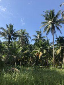 najpiękniejsza wyspa tajlandii