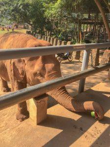 tajlandia szczesliwe slonie