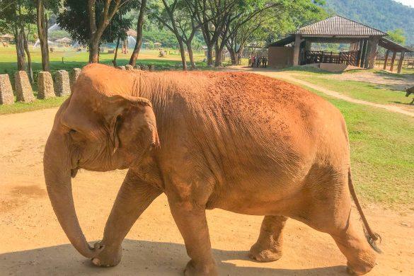 azja slonie