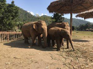 elephant nature park sanktuarium słoni