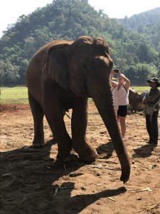 elephant nature park chory slon