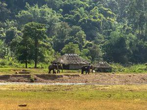 chiang mai jazda na sloniach