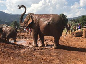 chiang mai sanktuarium dla sloni