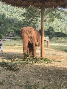 chore słonie sanktuarium