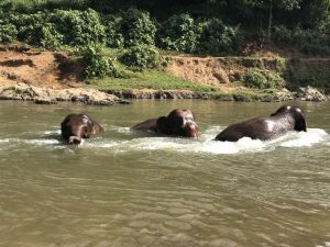 chiang mai słonie