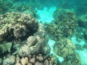snorkeling krabi wycieczka