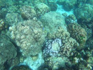 tajlandia krabi wycieczka