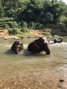 tajlandia elephant nature park