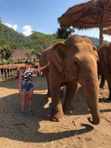 chiang mai szczęśliwe słonie
