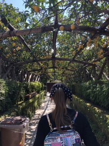 giardini di cataldo drzewa