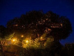 adventureland chatka na drzewie
