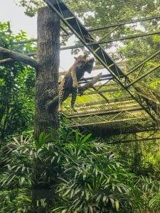 otwarte zoo