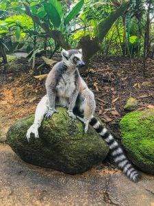 najlepsze zoo w azji południowo-wschodniej