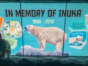 singapur niedźwiedź polarny