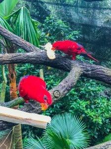 singapur zoo kolorowe papugi