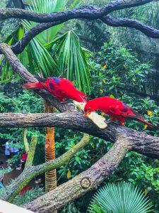 singapur najlepsze zoo