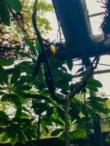 tukan w zoo