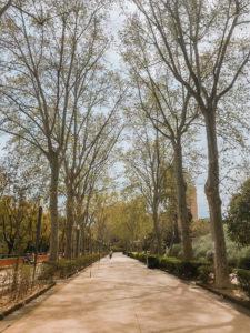 park w katanii