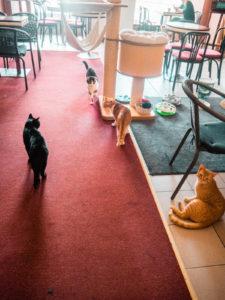 koty w kawiarni